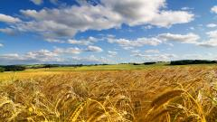 Field Background 31072