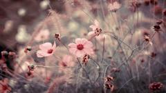Flower Meadow 20384