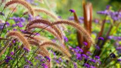 Flower Meadow 20385