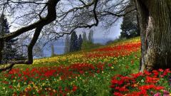 Flower Meadow 20386