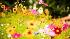 Flower Meadow 20392