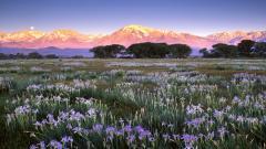 Flower Meadow 20397