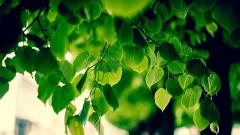 Foliage 35459