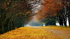 Foliage Wallpaper 35455