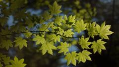 Foliage Wallpaper 35458