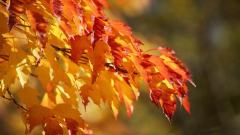 Foliage Wallpapers 35460
