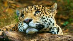 Free Animal Wallpaper 25045