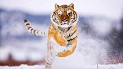 Free Animal Wallpaper 25048