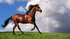 Free Brown Horse Wallpaper 32533