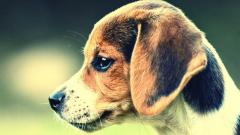 Free Dog Wallpaper 18220
