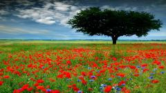 Free Flower Meadow Wallpaper 20391