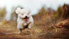 Free Happy Dog Wallpaper 39369
