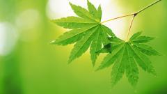 Free Leaf Wallpaper 27346