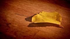 Free Leaf Wallpaper 27358