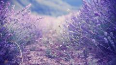 Free Lilac Wallpaper 20185