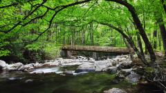 Free Mountain Stream Wallpaper 33675