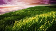Free Seagrass Wallpaper 21925