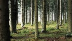 Free Woods Wallpaper 20375