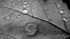 Gray Nature Wallpaper 22104
