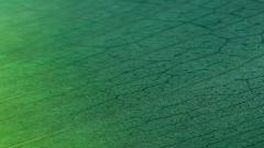 Green iOS 6 Wallpaper 22602
