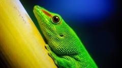 Green Lizard 21418