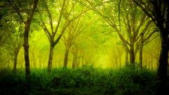 Green Nature 27776