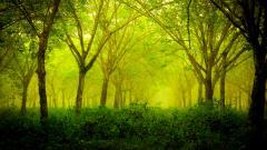 Green Nature 27776