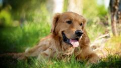 Happy Dog 39355