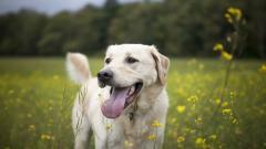 Happy Dog 39367