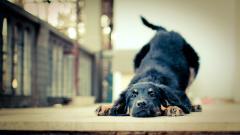 Happy Dog Background 39358