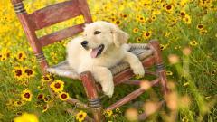 Happy Dog Pictures 39351