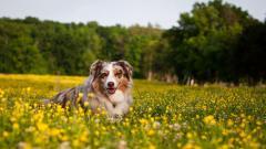 Happy Dog Wallpaper 39360