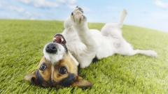 Happy Dog Wallpaper 39361