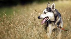 Happy Dog Wallpaper 39364
