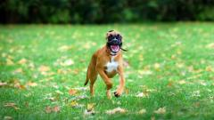 Happy Dog Wallpapers 39352