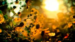 HD Sunshine Wallpaper 26251