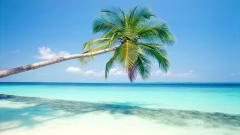 HD Tropical Wallpaper 25208