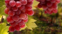 HD Vineyard Wallpaper 26373