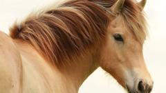 Horse Close Up 39695