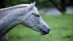 Horse Close Up Pictures 39699