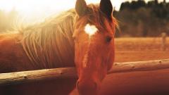 Horse Close Up Wallpaper 39698