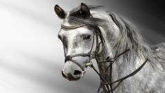 Horse Wallpaper HD 41338