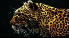 Jaguar 12808