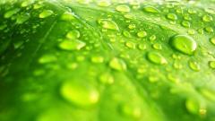 Leaf Background 27349