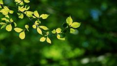 Leaf Wallpaper 27328