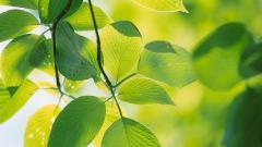 Leaf Wallpaper 27331