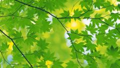 Leaf Wallpapers 27335