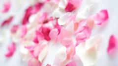 Light Pink Wallpaper 27929