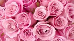 Light Pink Wallpaper 27930