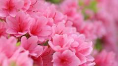 Light Pink Wallpaper 27932